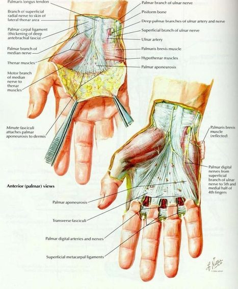 Are you Suffering from Dupytren's Contracture and Retinacular Cysts?   Health & Wellness   Scoop.it
