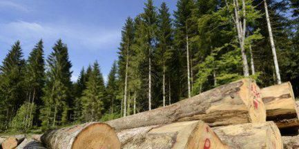 L'épicéa suisse menacé par un insecte, le bostryche | Geopolis | EntomoNews | Scoop.it