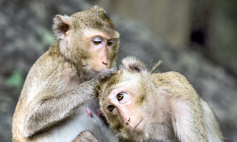 Sharing monkeys suggest amygdala affects kindness - Futurity | Emotional Wisdom | Scoop.it