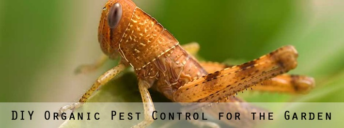 Garden Pest Control [Infographic] | 24/7 Pest Control | Container Gardening | Scoop.it