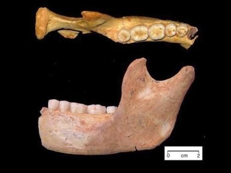 ¿Existe una relación entre la dieta y el tamaño de los dientes? | Arqueología, Historia Antigua y Medieval - Archeology, Ancient and Medieval History byTerrae Antiqvae (Blogs) | Scoop.it