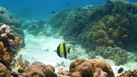 Snorkeling à Pulau Menjangan | Carnet d'escapades | Scoop.it