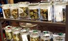 Marijuana legalisation: Colorado and Washington vote yes | NARKOTYKI | Scoop.it