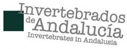 Invertebrados de Andalucía. Exposición en Casa de la Ciencia | Seviocio | La Andalucía Libre | Scoop.it