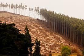 What's wrong with man-made tree plantations?   Biodiversity IS Life  – #Conservation #Ecosystems #Wildlife #Rivers #Forests #Environment   Scoop.it