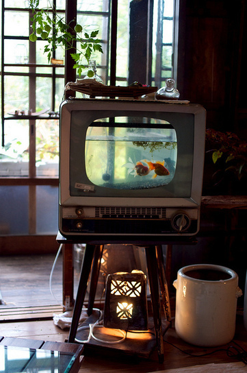 Put a goldfish in your TV | Let's Upcycle! | Scoop.it