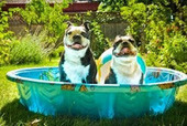 Bunny's Blog: Tips for relief from the dog days of summer | Pet News | Scoop.it