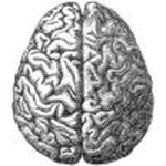 Neuroscientists discover brain area responsible for fear of losing money   NeuroLeadership   Scoop.it