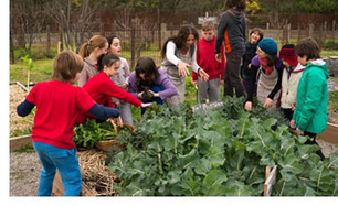 Teachers - Australian Organic Schools   History and Geography Sites for ES1 & S1 teachers - NSW Curriculum   Scoop.it