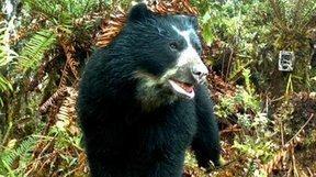 Manifestamos rechazo por el asesinato de un ejemplar de oso andino, en el municipio de Junín #NoAlaMuerteDeOsos | Agua | Scoop.it