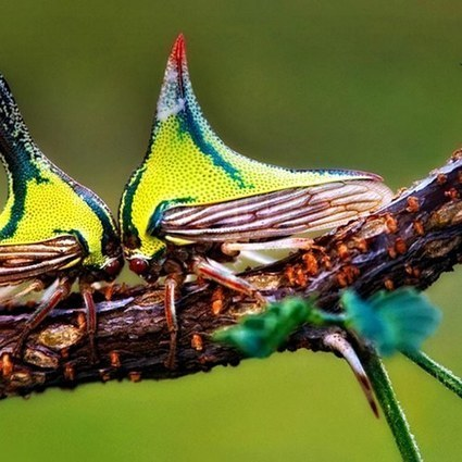 Christina Reed - Bugs Of Paradise: 16 Amazing And Odd Tropical Beasties You Need To See on Exposure | DIY Projects, Home Improvement Tips, Energy Efficiency Pets | Scoop.it