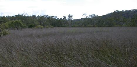Carbon farming could restore Australia's southern coastal wetlands   The Glory of the Garden   Scoop.it