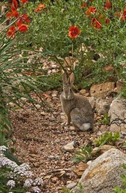 "Vacation Rental Photography – Saying ""cheese"" and ""thank you"" to the bunnies in your yard » WeNeedaVacation.com Homeowner Blog 