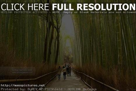 kyoto forest Japan | Nature | Scoop.it