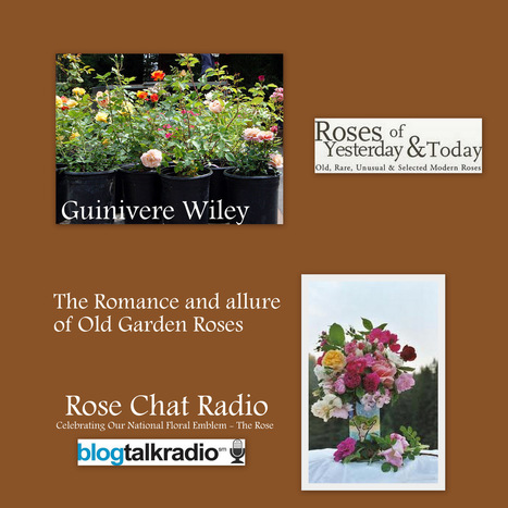 Rose Chat Radio | Exploring The World Of Roses | Annie Haven | Haven Brand | Scoop.it