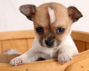 Sell Pets Online - Animals for Sale Australia | Pets - Buy Pets Online | Scoop.it