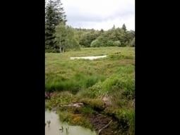 Jardin Botanique du Haut Chitelet : à fleur de terre ! - Xonrupt-Longemer - My lorraine   De Natura Rerum   Scoop.it