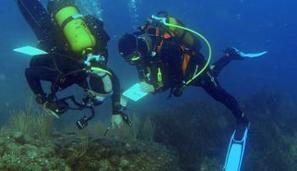 Inventaires d'espèces : 50 000 nouvelles données marines diffusées grâce à la contribution des plongeurs ! | EntomoNews | Scoop.it
