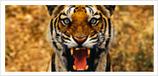 Bird Sanctuaries in India   List of bird sanctuaries in India   Scoop.it