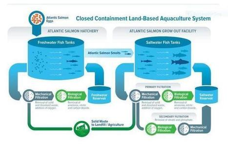 What makes Sustainable Blue land-raised salmon special? (Includes interview) - Digital Journal | Nova Scotia Fishing | Scoop.it