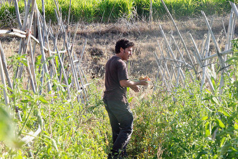 Eco-Friendly Agriculture Puts Down Roots in Spain | Inter Press Service | Food issues | Scoop.it