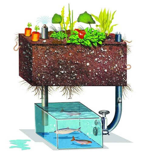 Build an Aquaponic Garden with Arduino | Aquaponics in Action | Scoop.it