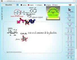 Animaciones de biología celular ~ Docente 2punto0   Ciencias de la salud y del medio ambiente   Scoop.it