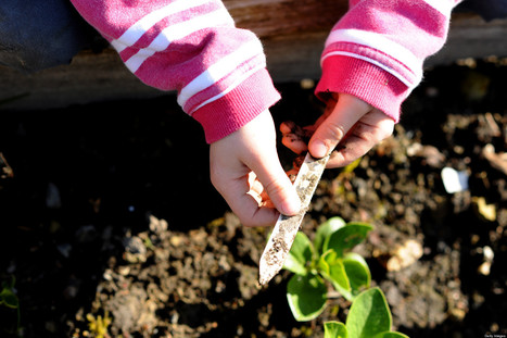 Food for Thought: Student Perspectives on School Gardens | Food issues | Scoop.it