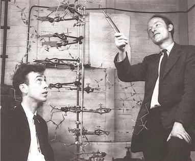 Crick's letter about DNA discovery to be sold at auction   Reuters   Science, research and innovation news   Scoop.it