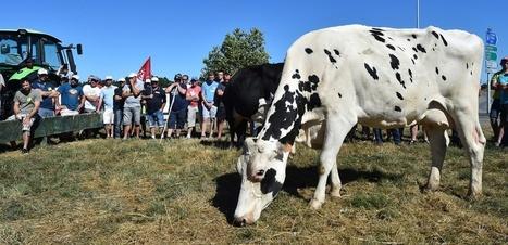 Crise du lait : 7 questions pour comprendre le rôle de Lactalis - Le nouvel obs | Le Fil @gricole | Scoop.it