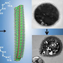 Recycled plastic effective in killing drug-resistant fungi | research | Scoop.it