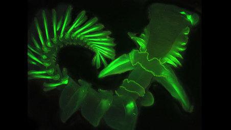 Ocean sea worms glow their own way - Mother Nature Network | Amocean OceanScoops | Scoop.it