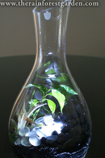 How to Make a Glowing Terrarium | Annie Haven | Haven Brand | Scoop.it