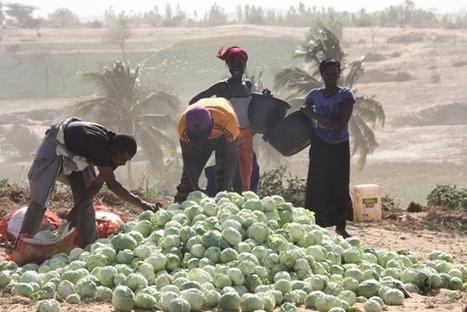 Genre et foncier : une équation non encore résolue au Sénégal. - Ipar, initiative prospective agricole et rurale | Afrique: développement durable et environnement | Scoop.it