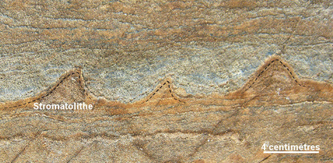 Des traces de vie de 3,7 milliards d'années? | Chronique d'un pays où il ne se passe rien... ou presque ! | Scoop.it