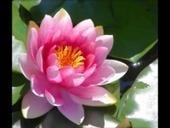 LES FONDEMENTS DE LA NATION KHMERE - Le blog de  Sangha OP | Cambodia - Khmer's Heart Voice | Scoop.it