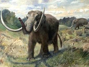 El ser humano ya causó la extinción de especies hace 100.000 años | Reflejos | Scoop.it