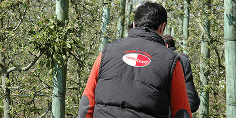 Les Vergers Launay rejoignent Pomanjou | Arboriculture: quoi de neuf? | Scoop.it