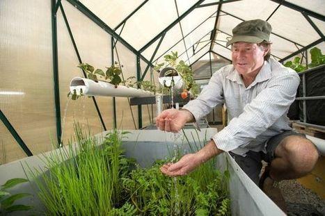 Community gardens pioneers aquaponics | Aquaponics in Action | Scoop.it