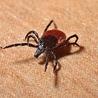 Lyme Disease & Other Vector Borne Diseases