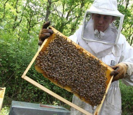 L'apiculture : «des sinistrés au secours des sinistrés» | Abeilles, intoxications et informations | Scoop.it