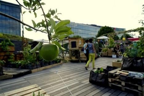 Toits Vivants, pour végétaliser la ville | Paris durable | Scoop.it