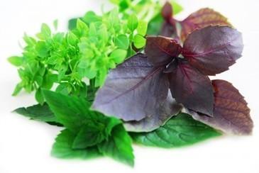 Ask Belinda: Herbs | Food Storage | Scoop.it