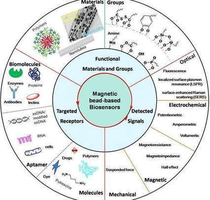 Magnetic nanoparticles show promise in biomedical applications | Amazing Science | Scoop.it