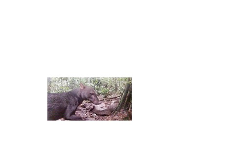 Extremely elusive jungle dog captured on camera by accident | Biodiversity protection | Scoop.it