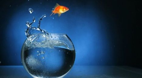 Can a goldfish show you how to excite your customers? | Sales and Business Development | Scoop.it