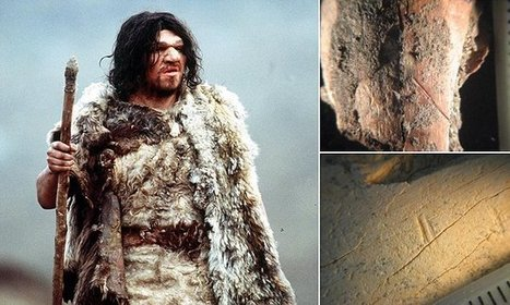 Neanderthals may have starved in the bitter cold   Aux origines   Scoop.it