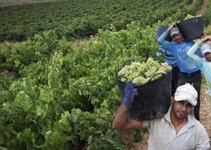 Fuga de bodegas en la Denominación de Origen Rioja | La empresa y la vida real | Scoop.it