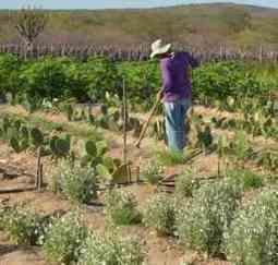 Agrosoft Brasil :: Investimento em pequenos agricultores é a melhor maneira de superar a pobreza | Agribusiness - Brasil | Scoop.it