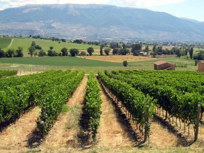 New Occasional Feature – The Wineries (we know) of Umbria ... | Gusto Wine Tours - Umbria | Scoop.it